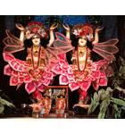 Sri Sri Gaura-Nitai - New Sankirtana Puri -  New Orleans, Louisiana